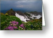 Rocky Mountains Greeting Cards Greeting Cards - The Alps Wildflowers Greeting Card by Debra and Dave Vanderlaan