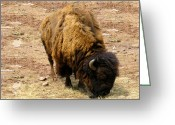 The American Buffalo Digital Art Greeting Cards - The American Buffalo Greeting Card by Bill Cannon
