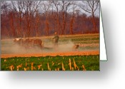 Amish Greeting Cards - The Amish Way Greeting Card by Scott Mahon