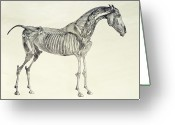 Table Drawings Greeting Cards - The Anatomy of the Horse Greeting Card by George Stubbs