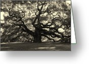 Black And White Photos Photo Greeting Cards - The Angel Oak Greeting Card by Susanne Van Hulst