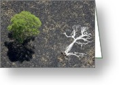 Image Type Photo Greeting Cards - The Ashes Of A Burned Tree And A Live Greeting Card by Michael Poliza