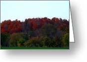 Reds Of Autumn Greeting Cards - The Backyard Greeting Card by Cyryn Fyrcyd