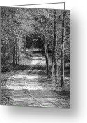 Carolyn Marshall Greeting Cards - The Beaten Path Greeting Card by Carolyn Marshall