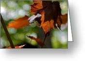 Red Leaves Greeting Cards - The Beauty Of Chaos Greeting Card by Odd Jeppesen