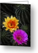Night Blooming Greeting Cards - The Beauty of the Desert  Greeting Card by Saija  Lehtonen