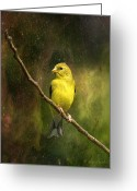 Backyard Goldfinch Digital Art Greeting Cards - The Beauty Of Youth Greeting Card by J Larry Walker