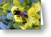 Brocolli Greeting Cards - The Bee and the Broccoli Flower Greeting Card by Darcy Haynes