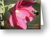 Hollyhock Greeting Cards - The Bee and the Hollyhock Greeting Card by Marjorie Imbeau