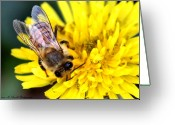 Honey Bee Greeting Cards - The Bee Greeting Card by Karen M Scovill