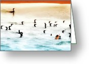 Feeding Digital Art Greeting Cards - The Birds Santa Rosa Island Greeting Card by Gus McCrea
