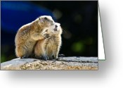 Groundhog Greeting Cards - The Bite Greeting Card by Edward Myers