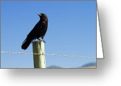 Black Beak Greeting Cards - The Black Greeting Card by Wayne Stadler
