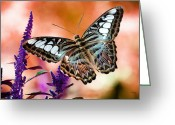 Photo Manipulation Greeting Cards - The Blue Clipper Greeting Card by Lois Bryan