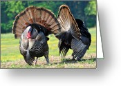 Eastern Turkey Greeting Cards - The Boys Greeting Card by Todd Hostetter