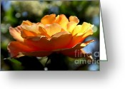 Single Rose Greeting Cards - The Bronze Star Greeting Card by Karen Wiles
