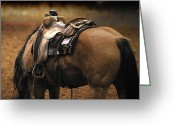 Quarter Horse Greeting Cards - The Buckskin Greeting Card by Karen Slagle