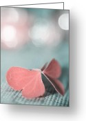 "\""aimelle Photography\\\"" Greeting Cards - The Butterfly p02b Greeting Card by Aimelle"