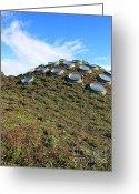 Golden Gate Park Greeting Cards - The California Academy of Sciences in San Francisco . 40D4274 Greeting Card by Wingsdomain Art and Photography