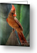 Cardinal Greeting Cards - The Cardinal  Greeting Card by Saija  Lehtonen