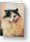 Lapdog Greeting Cards - The cat portrait Greeting Card by Odon Czintos
