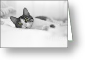 Office Pyrography Greeting Cards - The Cat  Greeting Card by Zafer GUDER