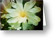 Star Magnolias Greeting Cards - The center of the Star Greeting Card by Cathie Tyler