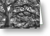 Black And White Greeting Cards - The Century Oak Greeting Card by Scott Norris