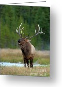Rut Greeting Cards - The Challenger Greeting Card by Sandra Bronstein