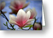 Magnolia Bloom Greeting Cards - The Color of Spring Greeting Card by Evelina Kremsdorf