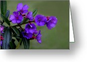 Dew Drop Greeting Cards - The Color Purple Greeting Card by Lyle  Huisken