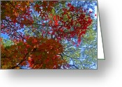 Autumn Colors Greeting Cards - The Colors of Autumn Greeting Card by Roberto Alamino