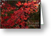 Fall Colors Greeting Cards - The Coming Change Greeting Card by Marjorie Imbeau