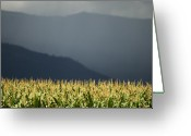 Kamloops Greeting Cards - The Cornfield Greeting Card by Peter Olsen
