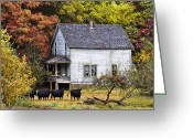 Abandoned Houses Greeting Cards - The Cows Came Home Greeting Card by Debra and Dave Vanderlaan