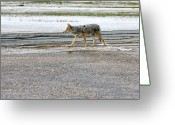 Brush Greeting Cards - The Coyote - Dogs are by far more dangerous Greeting Card by Christine Till