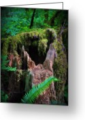 Oregon Wildlife Digital Art Greeting Cards - The Creatures Home Greeting Card by Amanda Horne