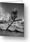National  Parks Greeting Cards - The Crooked Joshua Tree Greeting Card by Peter Tellone