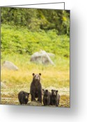 Grizzly Bears Greeting Cards - The Curious Mom Greeting Card by Tim Grams