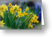 Christine Belt Greeting Cards - The Daffodil Reunion No.2 Greeting Card by Christine Belt