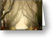 Dark Greeting Cards - The Dark Hedges 2011 Greeting Card by Pawel Klarecki