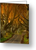 Northern Ireland Greeting Cards - The Dark Hedges II Greeting Card by Pawel Klarecki