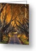 Morning Light Greeting Cards - The Dark Hedges III Greeting Card by Pawel Klarecki