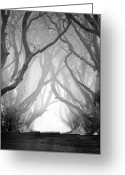 Klarecki Greeting Cards - The Dark Hedges IV Greeting Card by Pawel Klarecki