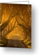 Tree Prints Greeting Cards - The Dark Hedges Greeting Card by Pawel Klarecki