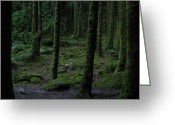 Dark Moss Green Photo Greeting Cards - The Dark Wood Greeting Card by Annemeet Van der Leij