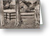 Fauquier County Greeting Cards - The Dog Patch BW Greeting Card by JC Findley