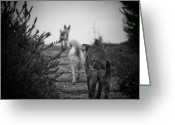 Steven Gray Greeting Cards - The Dogs of Pompeii Greeting Card by Steven Gray