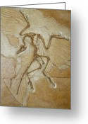 Birds Greeting Cards - The Earliest Bird, Archaeopteryx Greeting Card by Jason Edwards