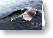 Seabirds Digital Art Greeting Cards - The Edge of the Fog Greeting Card by Dale   Ford